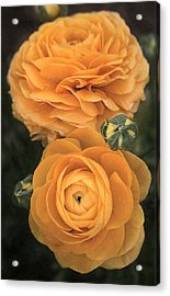 Yellow Blooms Acrylic Print by Louise Mingua