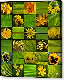 Yellow Blossoms Acrylic Print