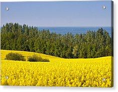 Yellow Blue Green Acrylic Print