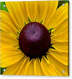 Acrylic Print featuring the photograph Yellow by Brian Hughes