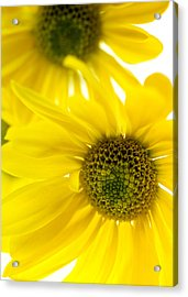 Yellow Bright Yellow Acrylic Print by Brad Rickerby