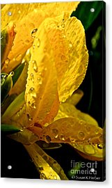 Yellow Canna Lily Acrylic Print by Susan Herber