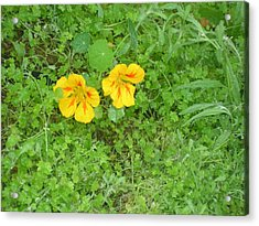 Yellow Couplet Acrylic Print