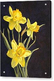 Acrylic Print featuring the painting Yellow Daffs by Vikki Bouffard