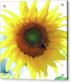 Yellow Day Acrylic Print