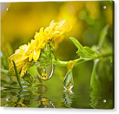 Yellow Drop Acrylic Print by Trudy Wilkerson