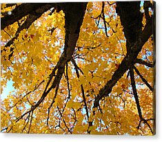 Yellow Fall Trees Prints Autumn Leaves Acrylic Print by Baslee Troutman