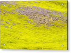 Yellow Fields Acrylic Print by Guido Montanes Castillo