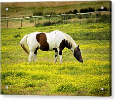 Yellow Fields Horse Acrylic Print by Wendy McKennon