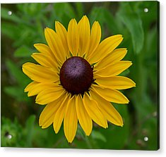 Acrylic Print featuring the photograph Yellow Flower by Brian Hughes