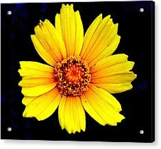 Yellow Flower Acrylic Print by Marty Koch