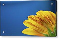 Yellow Flower Acrylic Print by www.Asif-Ali.com