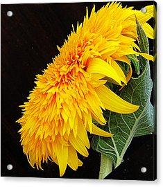 Acrylic Print featuring the photograph Yellow Flowers by Elvira Ladocki