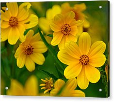 Acrylic Print featuring the photograph Yellow Flowers by Marty Koch