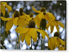 Yellow Flowers Acrylic Print by Naomi Berhane