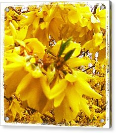 #yellow #flowers #weed #nature Acrylic Print