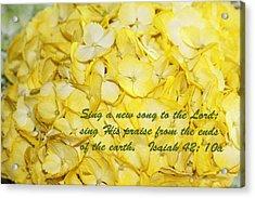 Yellow Hydrangea Isaiah 42v10 Acrylic Print by Linda Phelps