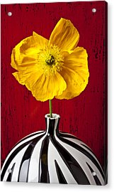 Yellow Iceland Poppy Acrylic Print by Garry Gay
