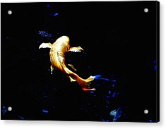 Yellow Koi Acrylic Print by Don Mann