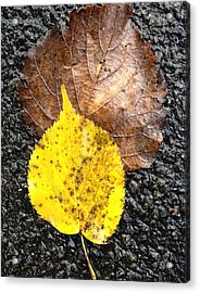Acrylic Print featuring the photograph Yellow Leaf In Rain by Shirin Shahram Badie