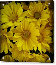 Yellow Love Acrylic Print by Chasity Johnson