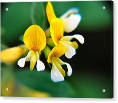 Acrylic Print featuring the photograph Yellow Macro by Wendy McKennon