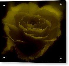 Acrylic Print featuring the photograph Yellow by Marija Djedovic