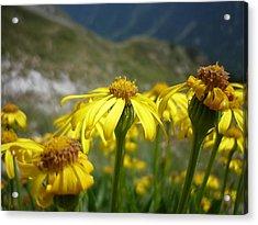 Yellow Mountain Flowers Acrylic Print by Martin Marinov