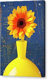 Yellow Mum In Yellow Vase Acrylic Print by Garry Gay