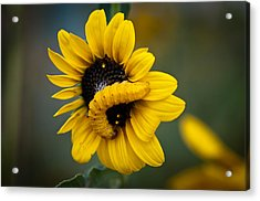 Acrylic Print featuring the photograph Yellow On Yellow by Monte Stevens