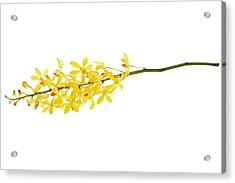 Yellow Orchid Bunch Acrylic Print by Atiketta Sangasaeng