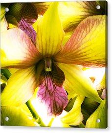 Yellow Orchid Acrylic Print by Joe Carini - Printscapes