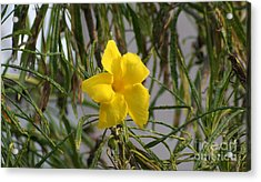 Acrylic Print featuring the digital art Yellow Orchid by John  Kolenberg