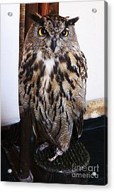 Yellow Owl Eyes Acrylic Print