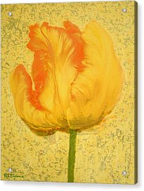 Yellow Parrot Tulip Acrylic Print by Richard James Digance