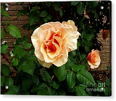 Yellow Peach Surprise  Acrylic Print by The Kepharts