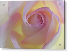 Yellow- Pink Acrylic Print by Carolyn Dalessandro