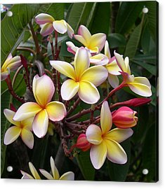 Acrylic Print featuring the digital art Yellow Plumeria by Claude McCoy
