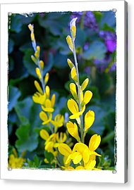 Acrylic Print featuring the photograph Yellow Plumes by Judi Bagwell