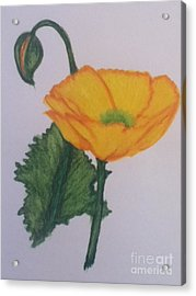 Yellow Poppy Acrylic Print by Berta Barocio-Sullivan