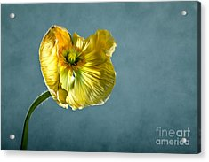 Yellow Poppy Acrylic Print by Nailia Schwarz