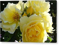 Acrylic Print featuring the photograph Yellow Rose by Jim Sauchyn