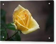 Acrylic Print featuring the photograph Yellow Rose Of Texas by Donna  Smith