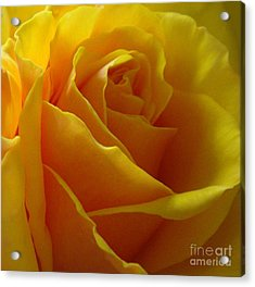 Acrylic Print featuring the photograph Yellow Rose Of Texas by Sandra Phryce-Jones