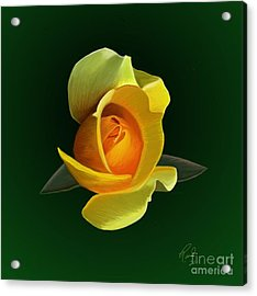 Acrylic Print featuring the painting Yellow Rose by Rand Herron