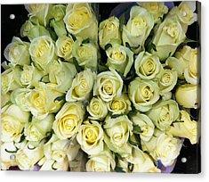 Yellow Roses Acrylic Print by Anna Villarreal Garbis