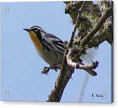 Acrylic Print featuring the photograph Yellow-throated Warbler by Roena King