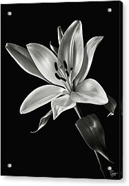 Yellow Tiger Lily In Black And White Acrylic Print