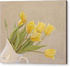 Yellow Tulips Acrylic Print by Kim Hojnacki