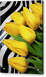 Yellow Tulips On Striped Plate Acrylic Print by Garry Gay